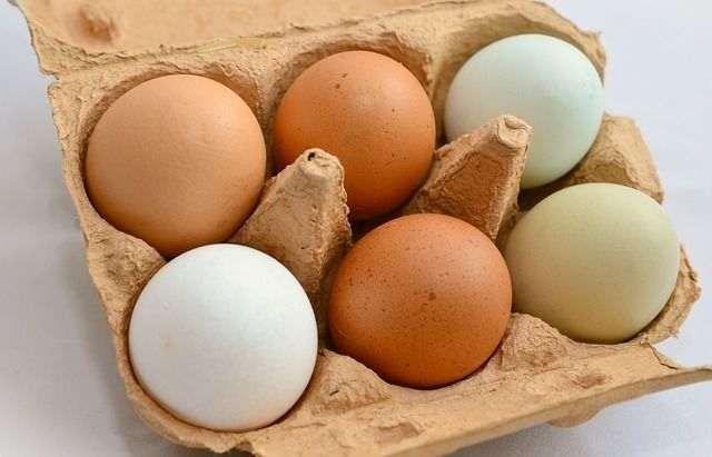 Réussir son élevage de poules pondeuses : les différents oeufs