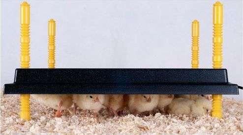 Panneau chauffant pour élevage poussin