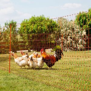 Filet poule simple pointe orange 50m PoultryNet suggestion d'utilisation