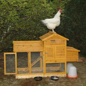 Poulailler Breda S Photo client avec poule