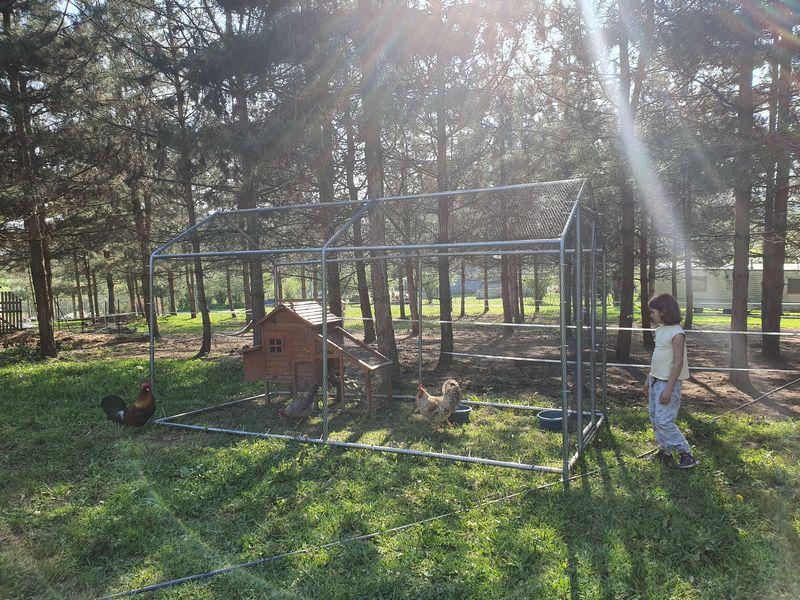 Occuper ses enfants avec des poules